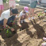 Κηπουρική στον χώρο μας